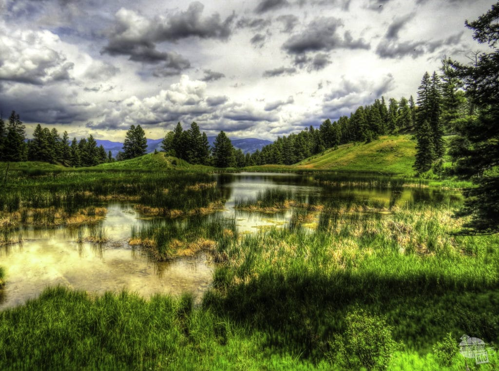 The Beaver Ponds Loop is a scenic Yellowstone hike.