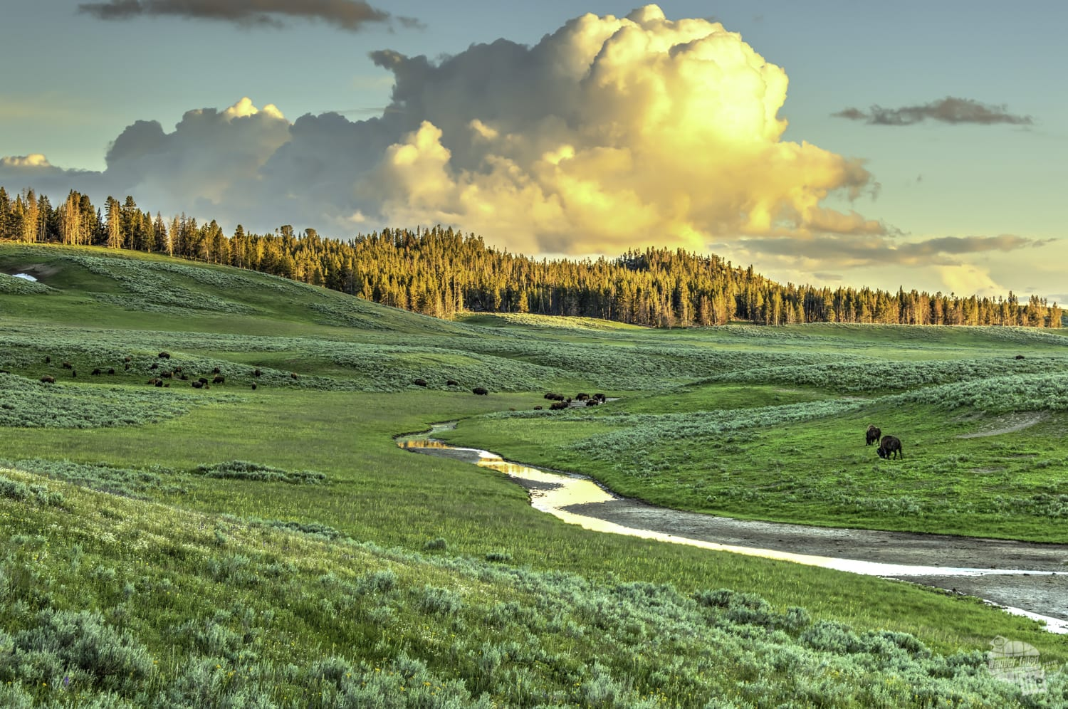 Great views are all around in Yellowstone.