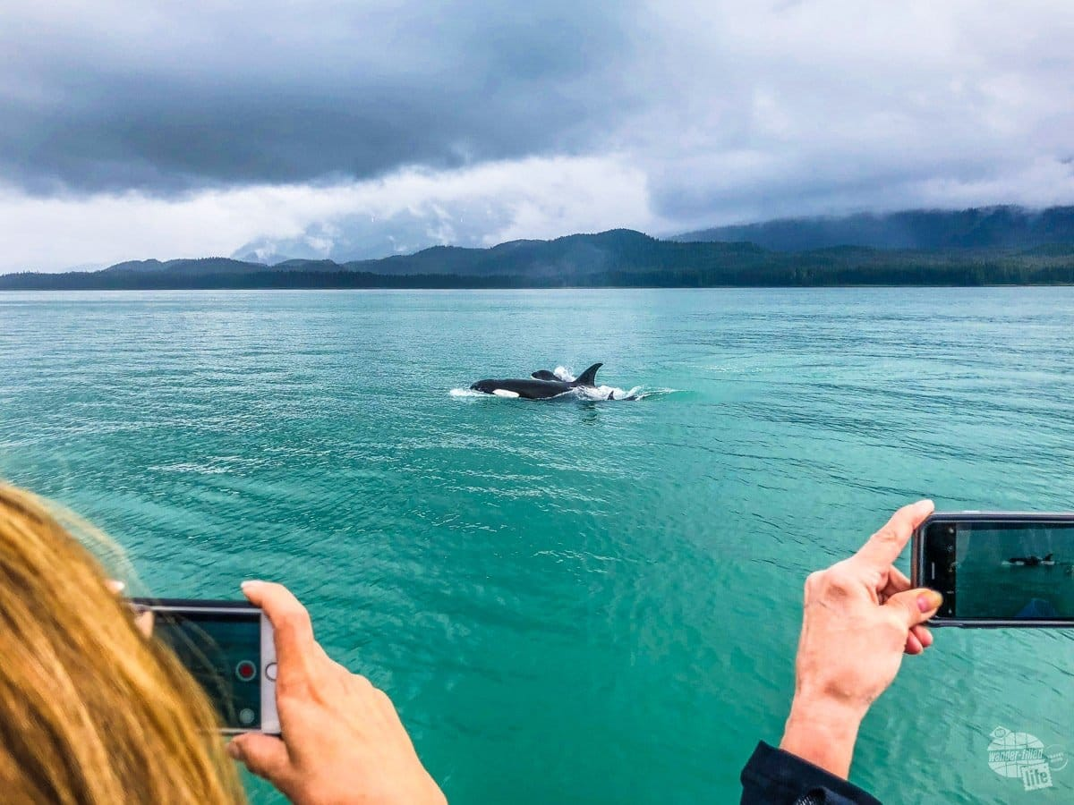 Seeing orcas so close!