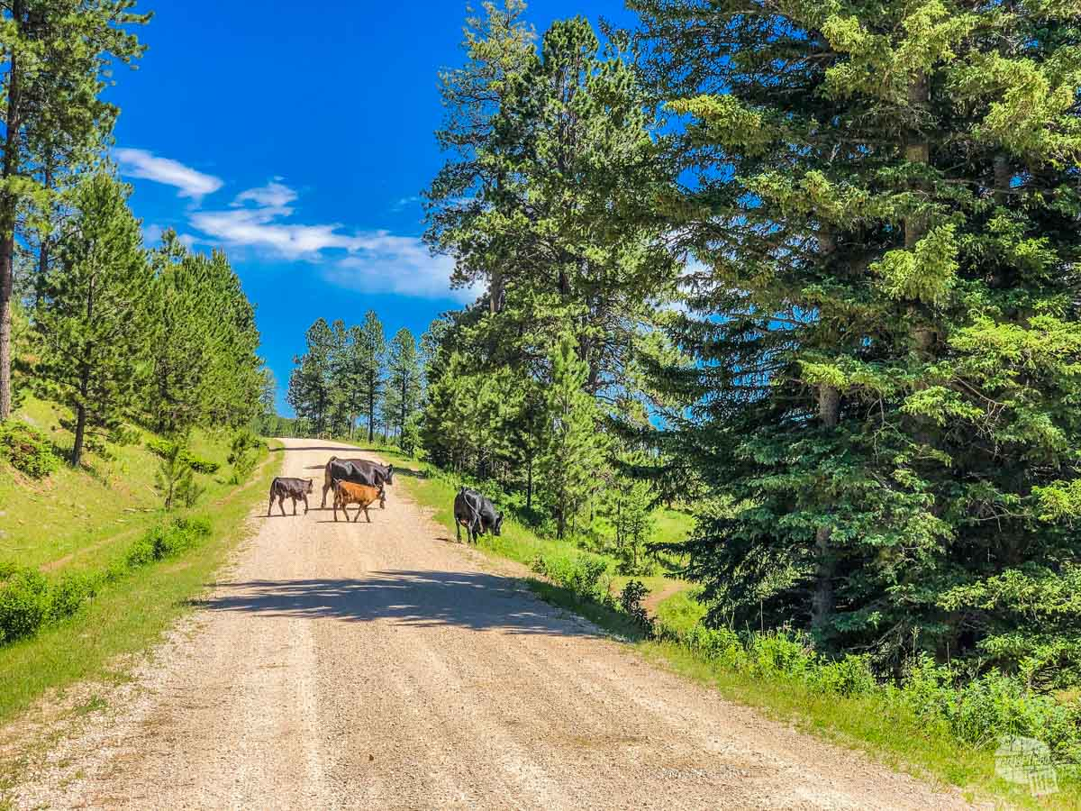 You never know what you'll find when ATVing in the Black Hills.