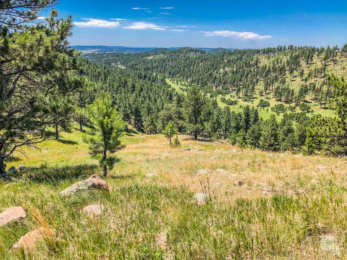 View of the Black Hills from  Rankin Ridge in Wind Cave National Park.